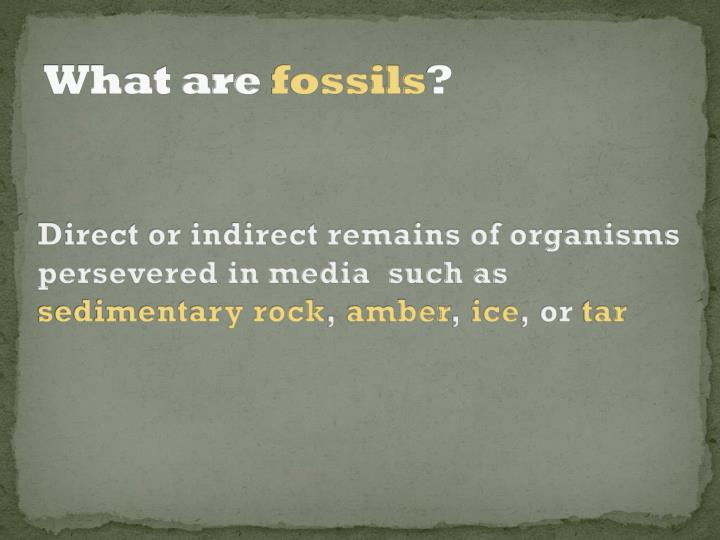 what are fossils n.