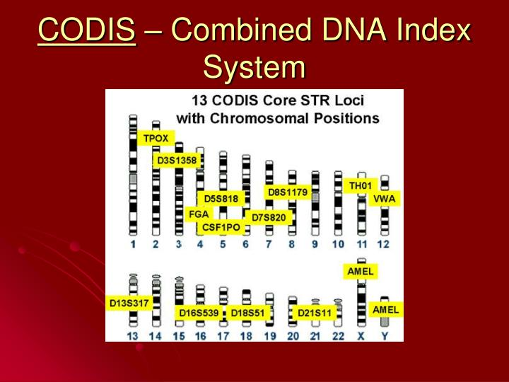 dna databases codis In this clip from beyond reasonable doubt, investigators had dna evidence in a violent rape case, but their case went cold until the fbi's codis system.