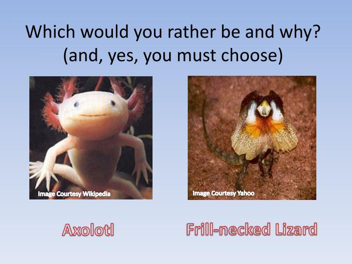 which would you rather be and why and yes you must choose n.