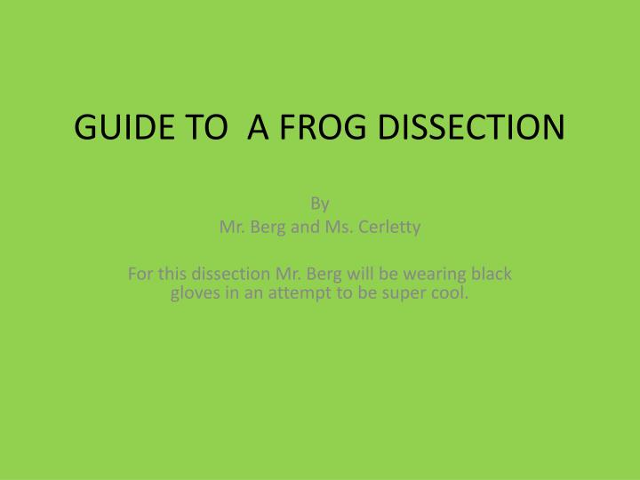 guide to a frog dissection n.