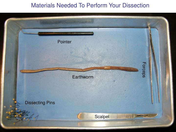 Materials Needed To Perform Your Dissection