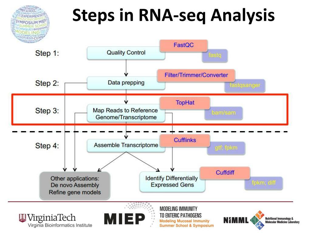 PPT - RNA- seq Analysis in Galaxy PowerPoint Presentation