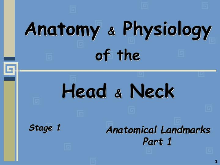 PPT - Anatomy & Physiology of the Head & Neck PowerPoint ...