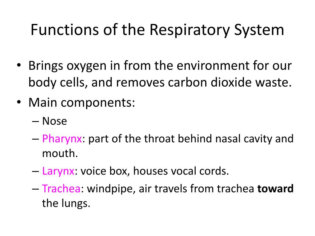 Ppt Functions Of The Respiratory System Powerpoint Presentation