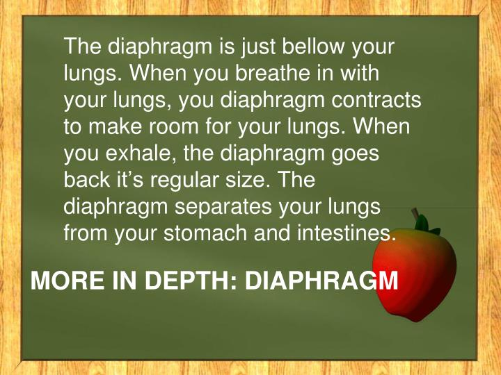 The diaphragm is just bellow your lungs. When you breathe in with your lungs, you diaphragm contracts to make room for your lungs. When you exhale, the diaphragm goes back it's regular size. The diaphragm separates your lungs from your stomach and intestines.
