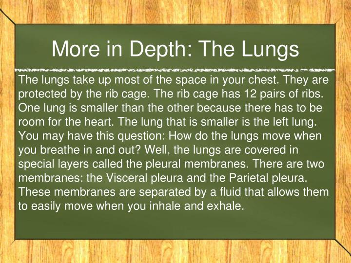 More in Depth: The Lungs