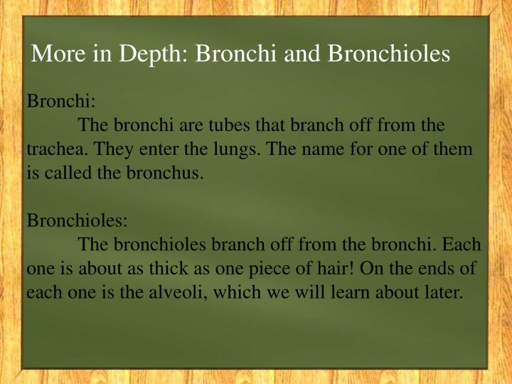 More in Depth: Bronchi and Bronchioles