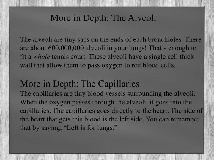 More in Depth: The Alveoli