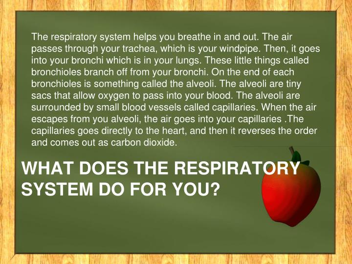 What does the respiratory system do for you