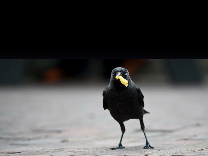 Raven en een weduwe