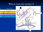 what is molecule number 1