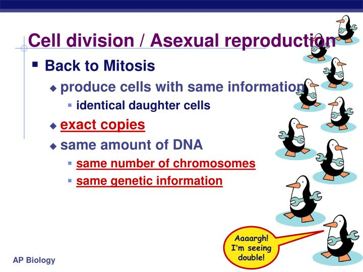 Cell division asexual reproduction