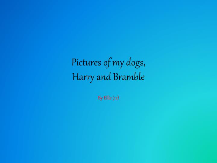 pictures of my dogs harry and bramble n.