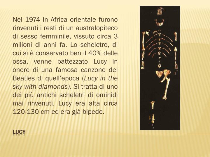 Nel 1974 in Africa orientale furono rinvenuti i resti di un australopiteco di sesso femminile, vissuto circa 3 milioni di anni fa. Lo scheletro, di cui si è conservato ben il 40% delle ossa, venne battezzato Lucy in onore di una famosa canzone dei Beatles di quell'epoca (