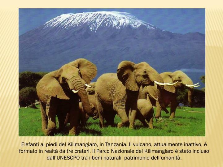 Elefanti ai piedi del Kilimangiaro, in