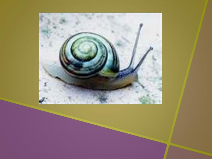 Super gary snail