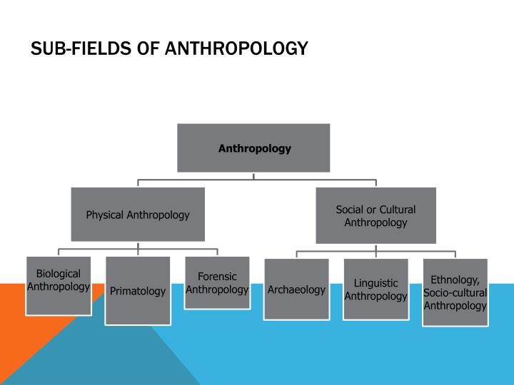 five subfields of anthropology It is concerned with both the biological and the cultural aspects of humans included in anthropology are four main subfields: biological (or physical) anthropology.