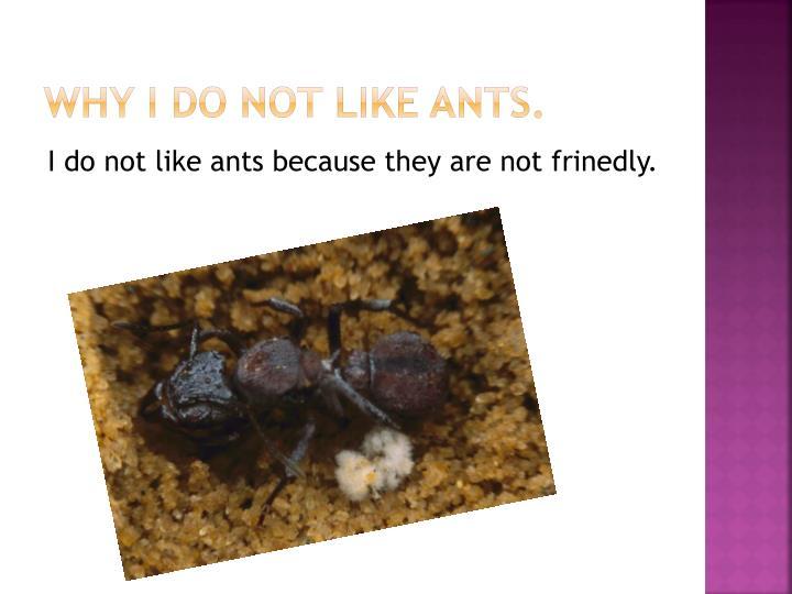 Why I do not like ants.