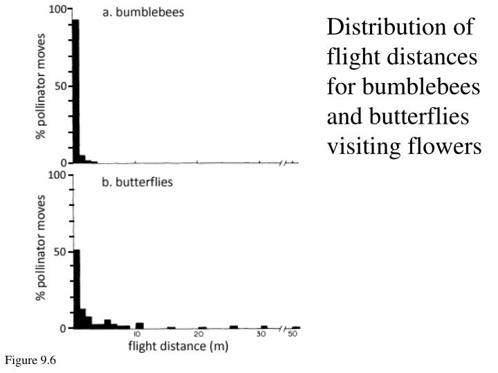 Distribution of flight distances for bumblebees and butterflies visiting flowers