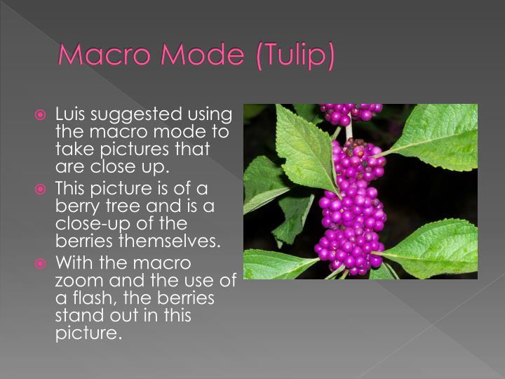 Macro mode tulip