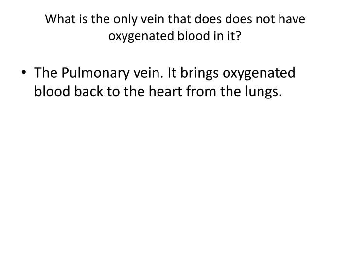 What is the only vein that does