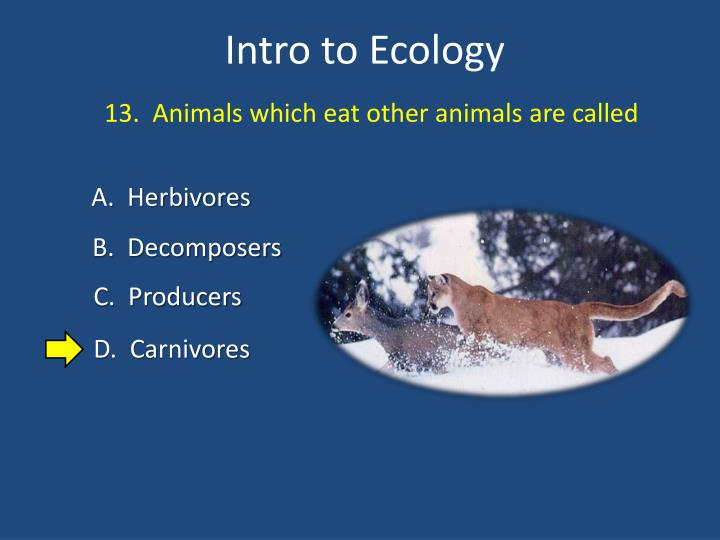 13.  Animals which eat other animals are called