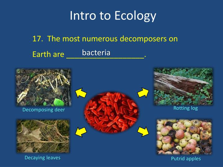 17.  The most numerous decomposers on Earth are __________________.
