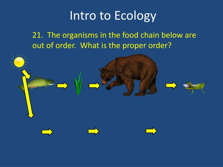 21.  The organisms in the food chain below are out of order.  What is the proper order?