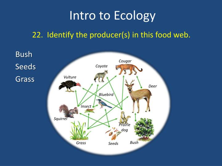 22.  Identify the producer(s) in this food web.