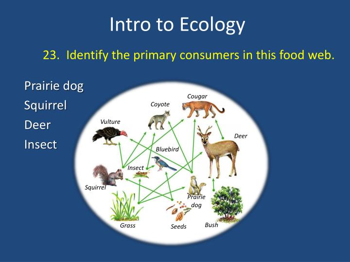23.  Identify the primary consumers in this food web.