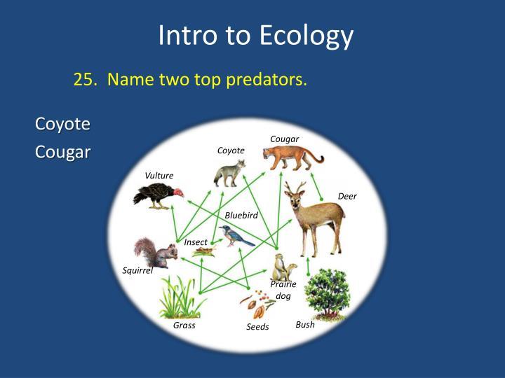 25.  Name two top predators.