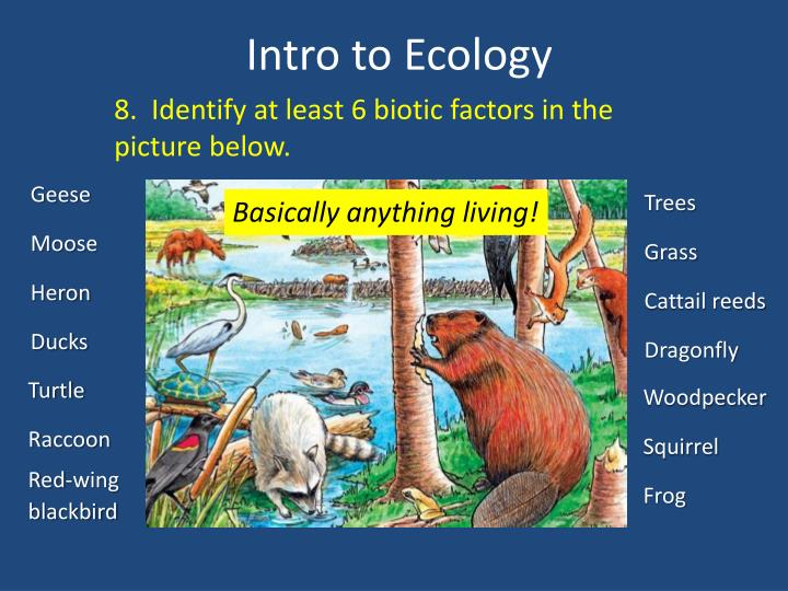 8.  Identify at least 6 biotic factors in the picture below.