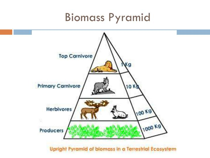 PPT - Unit: Ecological Biomes and Human Impacts on the ...