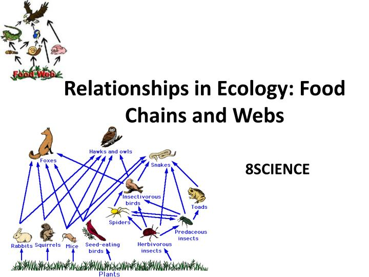 food chain food web and ecological