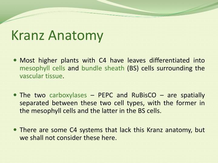 PPT - C4 Photosynthesis - Mechanism PowerPoint Presentation - ID:2823230