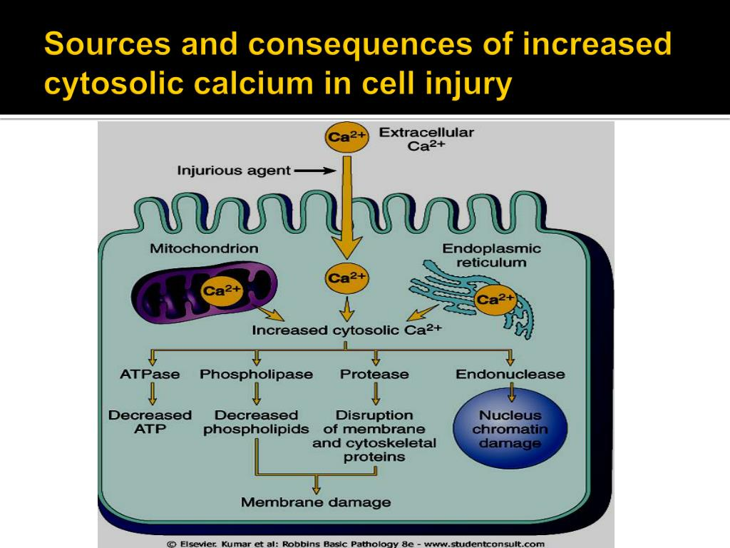 PPT - MECHANISMS OF CELL INJURY PowerPoint Presentation - ID