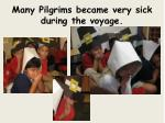many pilgrims became very sick during the voyage