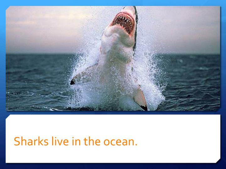 Sharks live in the ocean
