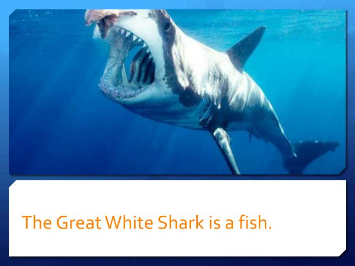 The Great White Shark is a fish.