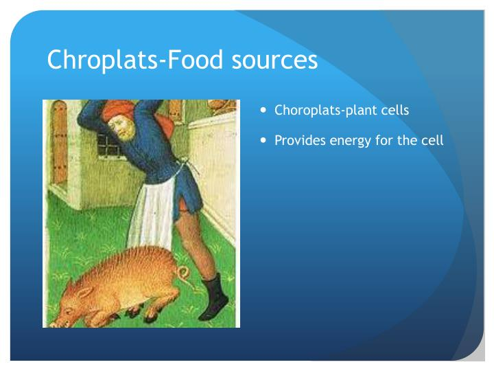 Chroplats-Food sources