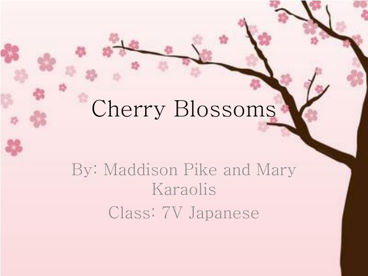 cherry blossoms n.