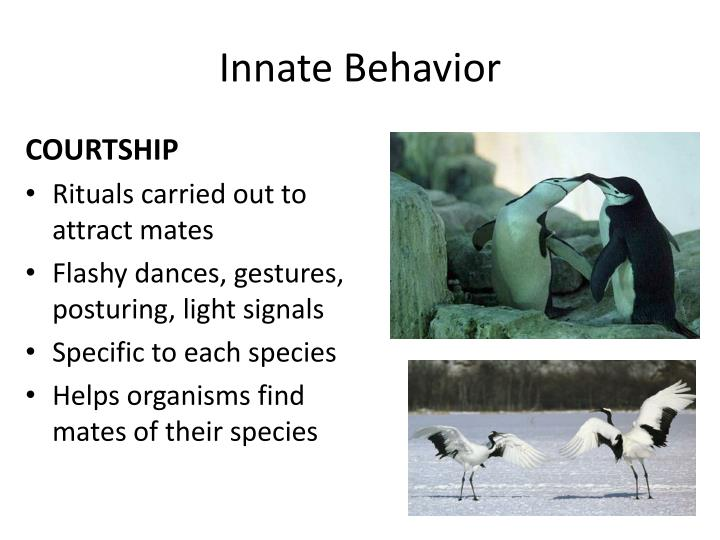Ppt Animal Behavior Behavioranything An Animal Does In Response