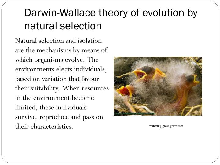 an analysis of the theories of darwin and wallace Generally referred to as the darwin-wallace theory of natural selection in honor of the ideas both darwin and wallace developed darwin's 5 theories.