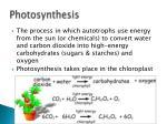photosynthesis5