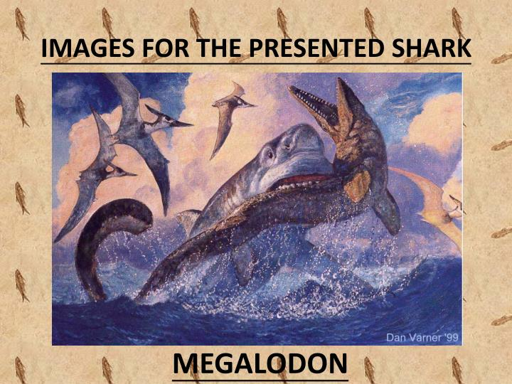 Images for the presented shark