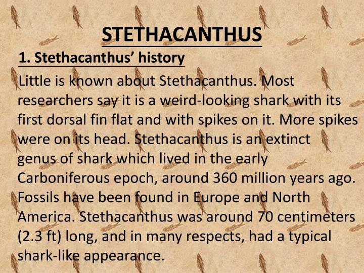 STETHACANTHUS