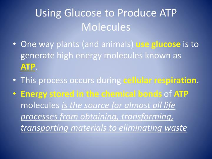 Using Glucose to Produce ATP Molecules