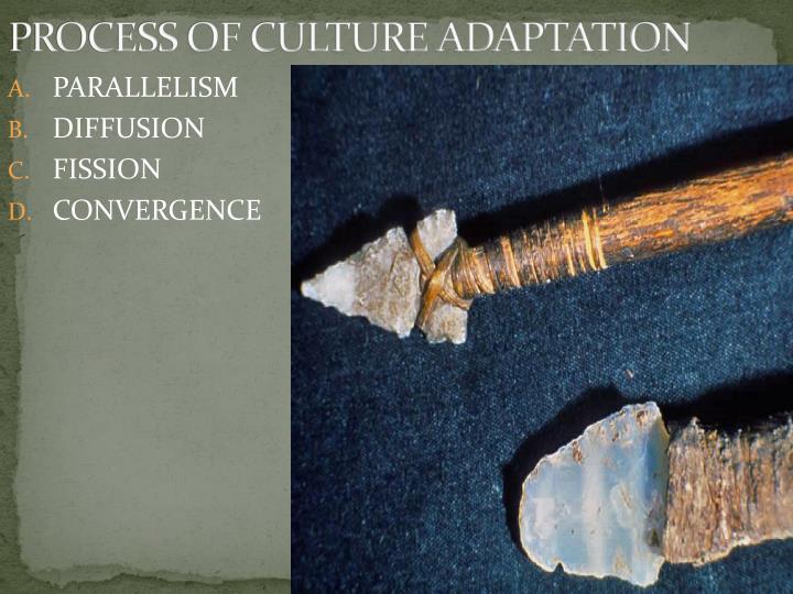 PROCESS OF CULTURE ADAPTATION