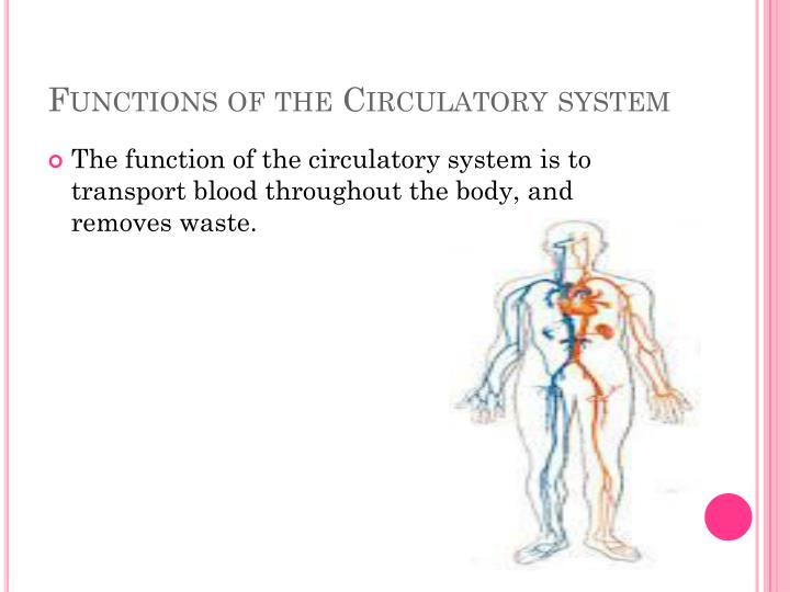 Ppt The Circulatory System Powerpoint Presentation Id2829702