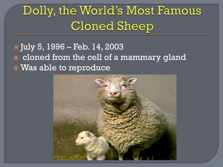 Dolly, the World's Most Famous Cloned Sheep